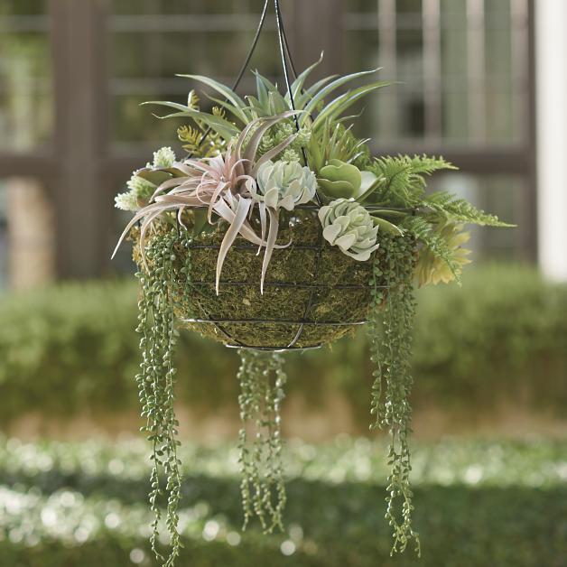 Hanging Succulent Arrangement