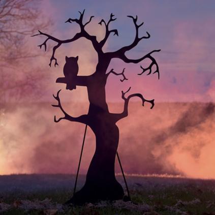 silhouette spooky tree grandin road
